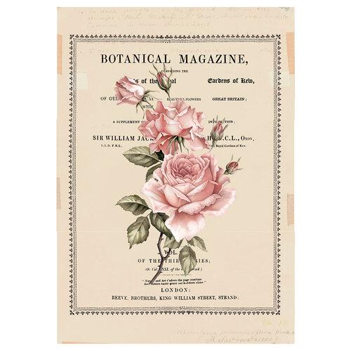 Re-Design - Decor Transfers - Beautiful Botanist