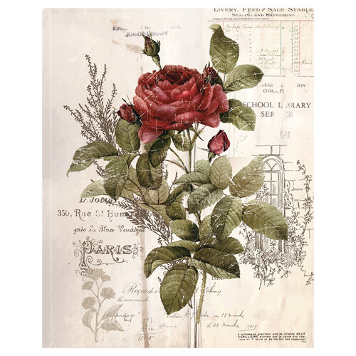 Re-Design - Transfer - Botanical Rose