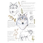 Re-Design - Transfers - Gray Wolf