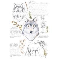 Re-Design - Transfers - Gray Wolf