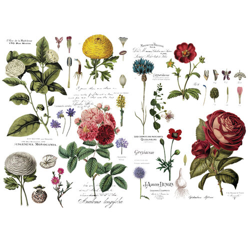 Re-Design - Transfers - Vintage Botanical