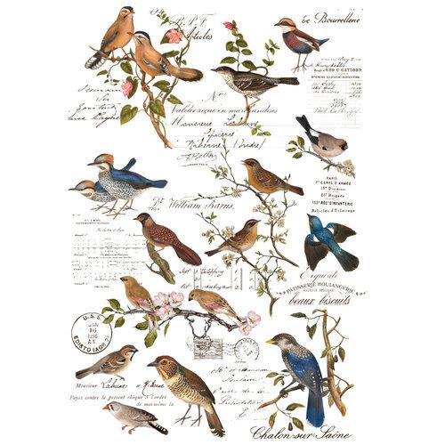Re-Design - Transfers - Postal Birds