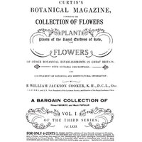 Re-Design - Transfers - Botanical Magazine