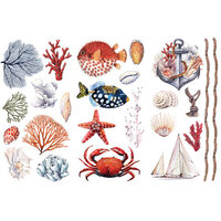 Re-Design - Transfers - Amazing Sea Life