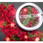 Prima - Calypso Holiday Collection - Christmas - Flower Tin - Poinsettia