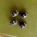 Prima - Memory Hardware - French Regalia - Crowns I