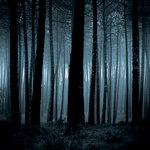 Ella and Viv Paper Company - Dark Hallow Collection - Halloween - 12 x 12 Paper - Sleepy Hollow