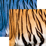 Ella and Viv Paper Company - Animal Kingdom Collection - 12 x 12 Double Sided Paper - Bengal Tiger