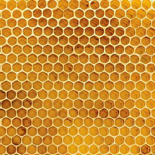 Ella and Viv Paper Company - 100 Percent Natural Collection - 12 x 12 Paper - Honeycomb