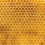 Ella and Viv Paper Company - 100 Percent Natural Collection - 12 x 12 Paper - Honeycomb