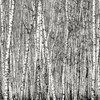 Ella and Viv Paper Company - 100 Percent Natural Collection - 12 x 12 Paper - Aspen Trees