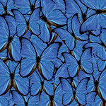 Ella and Viv Paper Company - The Butterfly Effect Collection - 12 x 12 Paper - Blue Butterflies