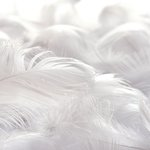 Ella and Viv Paper Company - Ethereal Collection - 12 x 12 Paper - Feathered