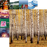 Reminisce - Happy Camper Collection - 12 x 12 Double Sided Paper - Forest for the Trees