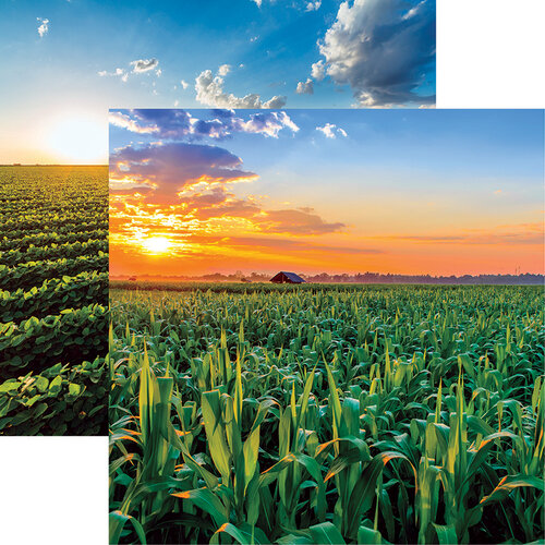 Ella and Viv Paper Company - In The Field Collection - 12 x 12 Double Sided Paper - Corn
