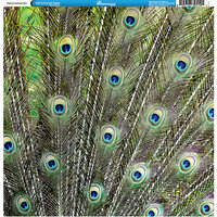 Reminisce - Animal Prints Collection - 12 x 12 Single Sided Paper - Peacock