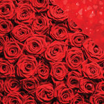 Reminisce - Romantique Collection - 12 x 12 Double Sided Paper - Dozens of Roses