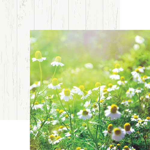 Reminisce - Wildflower Collection - 12 x 12 Double Sided Paper - Field of Daisies