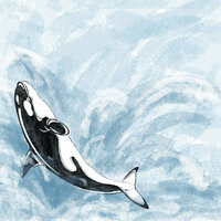 Scrapbook Customs - United States Collection - Alaska - 12 x 12 Paper - Killer Whale