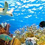 Scrapbook Customs - 12 x 12 Paper - Underwater - Left Watercolor
