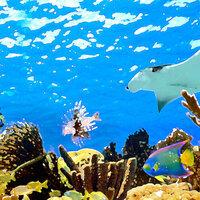 Scrapbook Customs - 12 x 12 Paper - Underwater - Right Watercolor