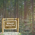 Scrapbook Customs - United States National Parks Collection - 12 x 12 Double Sided Paper - Watercolor - Redwood