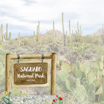 Scrapbook Customs - United States National Parks Collection - 12 x 12 Double Sided Paper - Watercolor - Saguaro