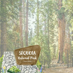 Scrapbook Customs - United States National Parks Collection - 12 x 12 Double Sided Paper - Watercolor - Sequoia