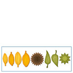 Spellbinders - Shapeabilities Collection - D-Lites Die - Create A Sunflower