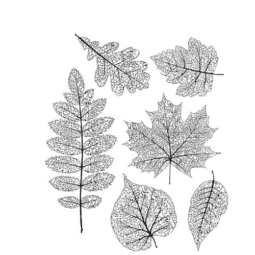 Stampers Anonymous - Tim Holtz - Cling Mounted Rubber Stamp Set - Pressed Foliage