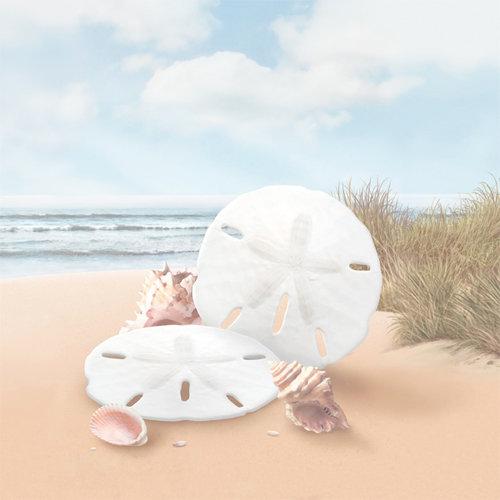 SugarTree - 12 x 12 Paper - Sand Dollars