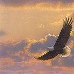 SugarTree - 12 x 12 Paper - Sunset Soaring Eagle