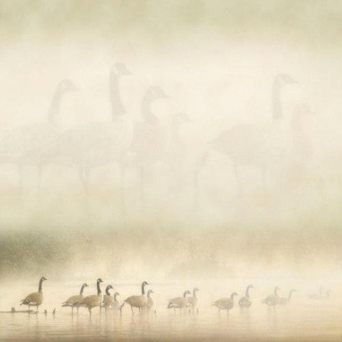 SugarTree - 12 x 12 Paper - Morning Mist