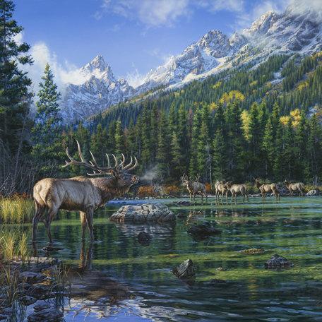SugarTree - 12 x 12 Paper - Elk Mountain