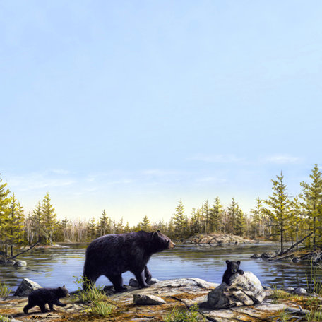 SugarTree - 12 x 12 Paper - Black Bear Pond