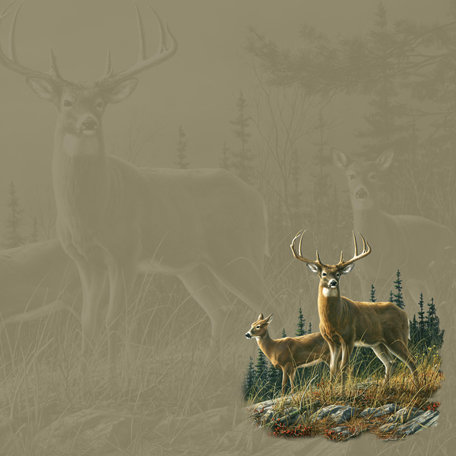 SugarTree - 12 x 12 Paper - Whitetail Pair