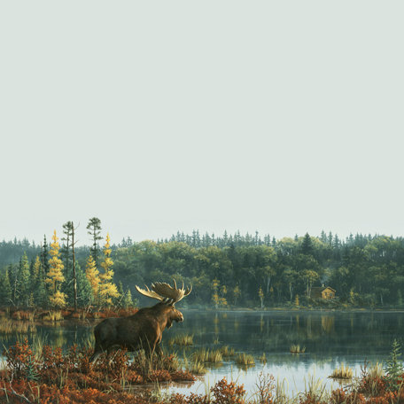 SugarTree - 12 x 12 Paper - Lone Moose