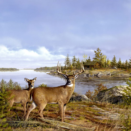 SugarTree - 12 x 12 Paper - Lake Side Deer