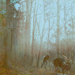 SugarTree - 12 x 12 Paper - Bow Hunting for Deer