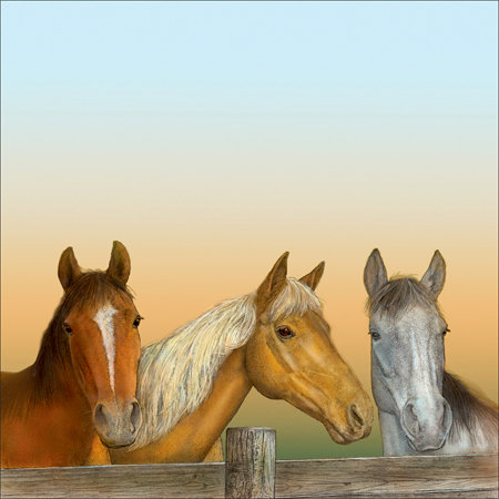 SugarTree - 12 x 12 Paper - Horse Pals