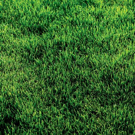 SugarTree - 12 x 12 Paper - Green Grass