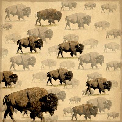 SugarTree - 12 x 12 Paper - Wild Buffalo