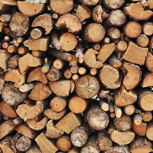 SugarTree - 12 x 12 Paper - Firewood