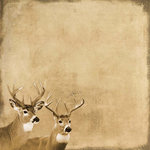 SugarTree - 12 x 12 Paper - Antlered Deer