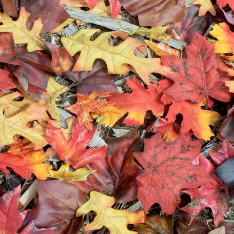 SugarTree - 12 x 12 Paper - Fall Leaves