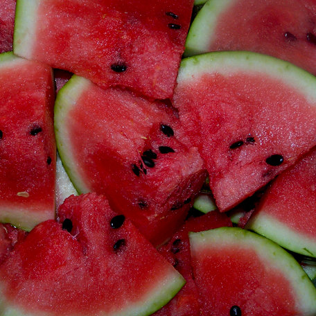 SugarTree - 12 x 12 Paper - Watermelon
