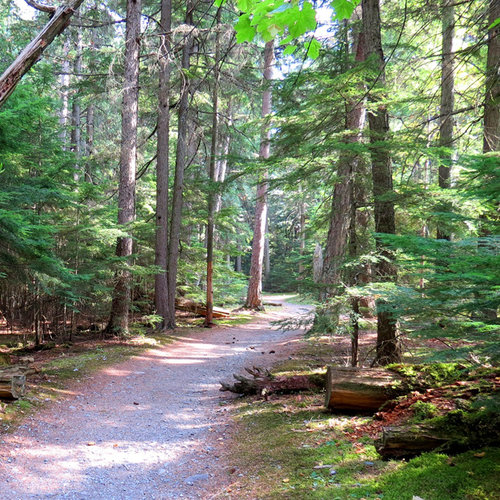 SugarTree - 12 x 12 Paper - Hiking Wooded Trail