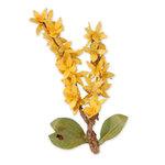 Sizzix - Susan's Garden Collection - Thinlits Die - Flower, Forsythia