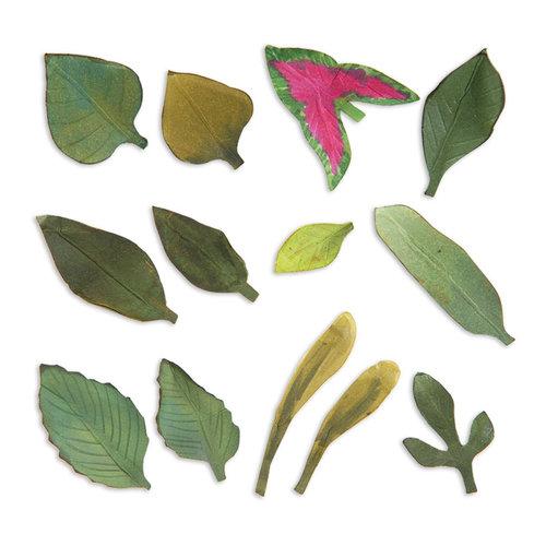 Sizzix - Susan's Garden Collection - Thinlits Die - Leaves, Garden