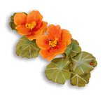 Sizzix - Susan's Garden Collection - Thinlits Die - Flower, Nasturtium